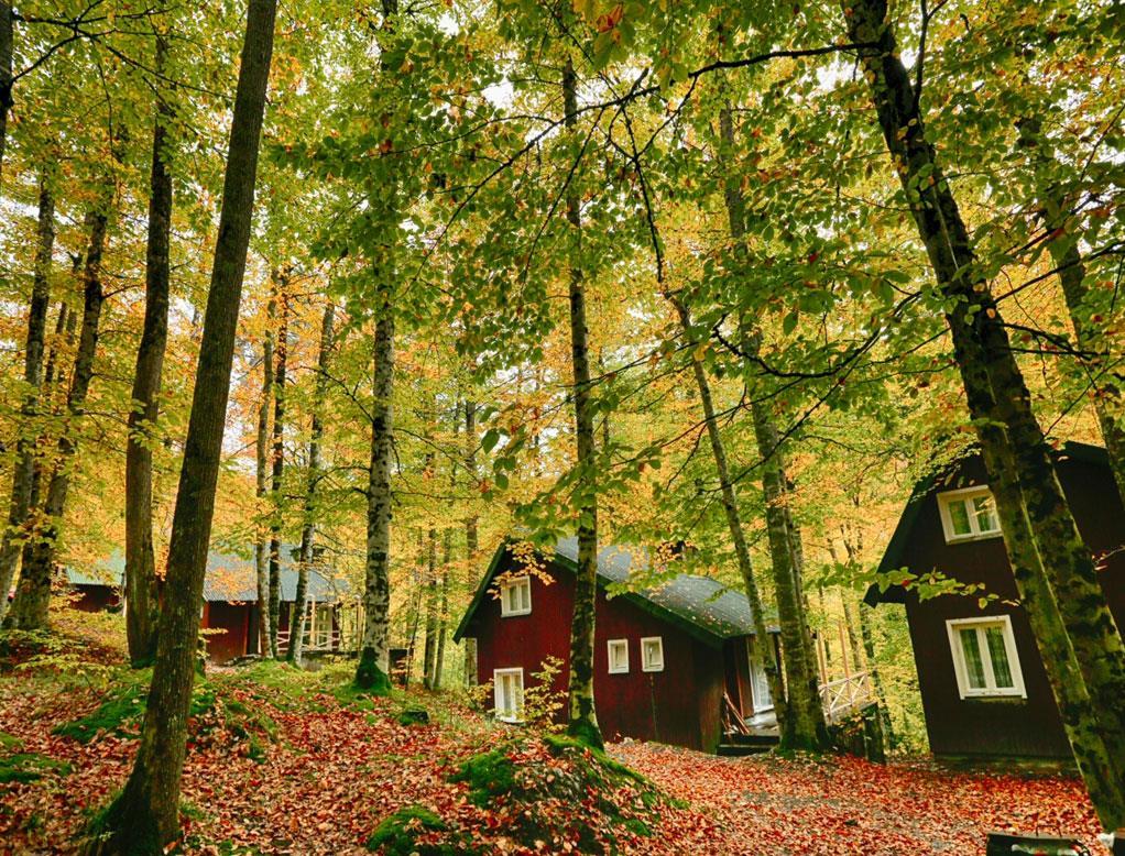 Yedi Göller bungalovları foto.Habitat Mesire.jpg